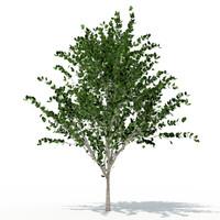 3ds max deciduous tree