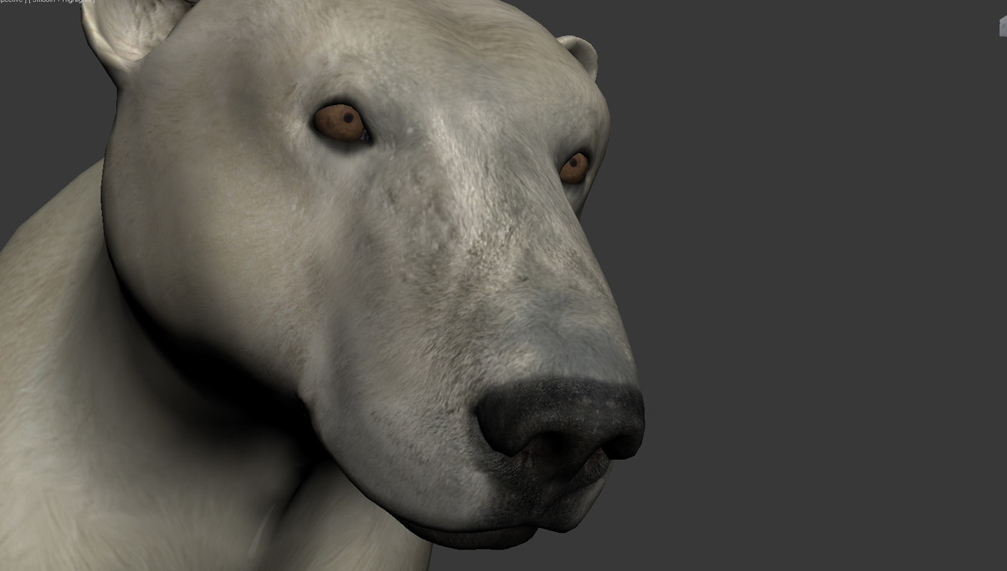 3d max polar bear