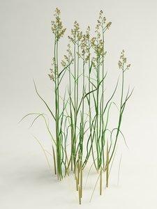 grass dactylis crocksfoot model