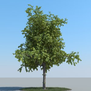 max realistic linden tree leaf