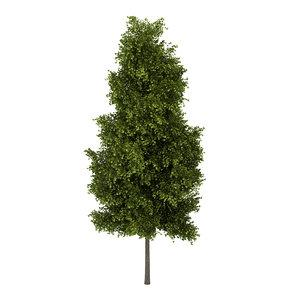 3d model poplar populus