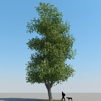 3d model of realistic chestnut tree leaf