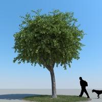 realistic maple tree 3d model