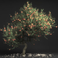 3d prius malus appletree tree model