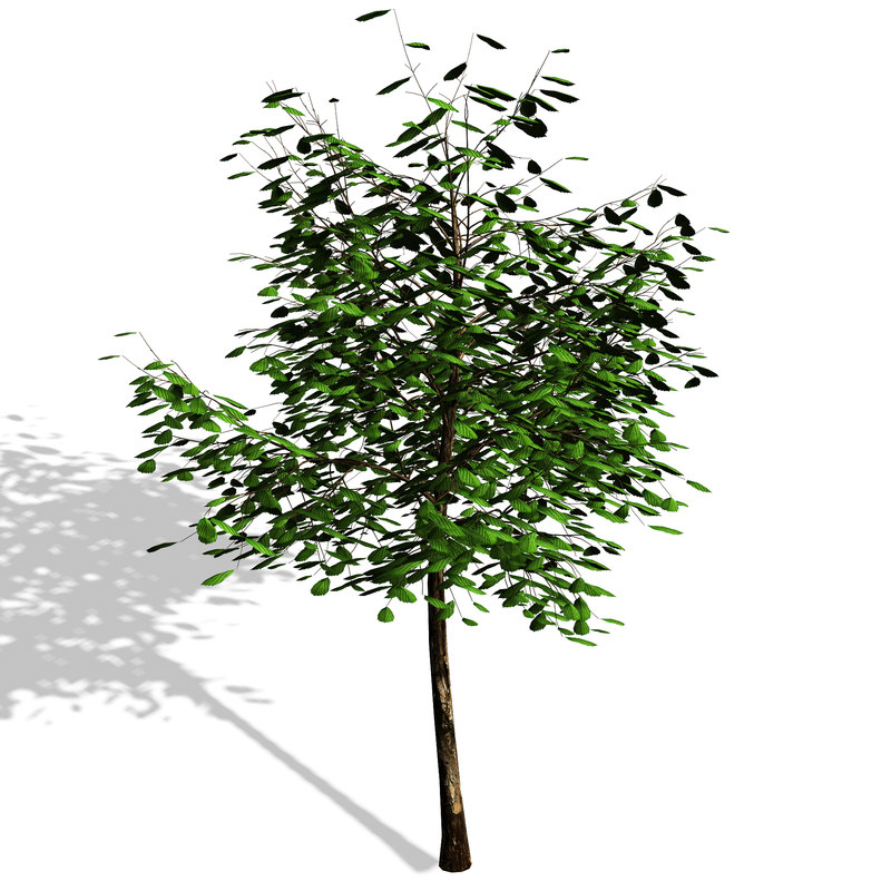 3d model tree polygons