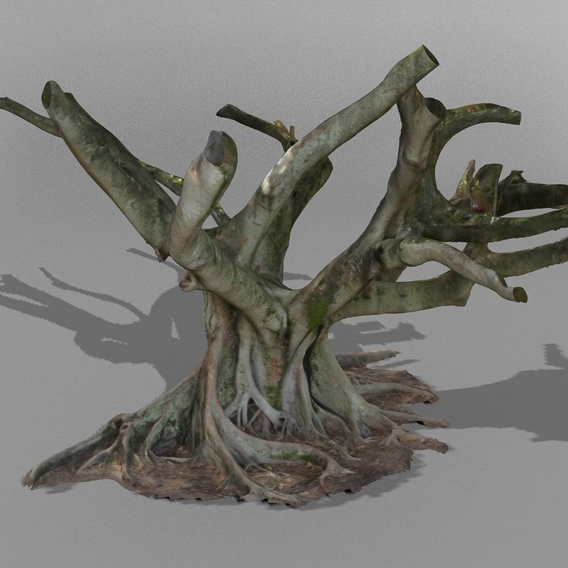 australian fig tree scanned 3d model