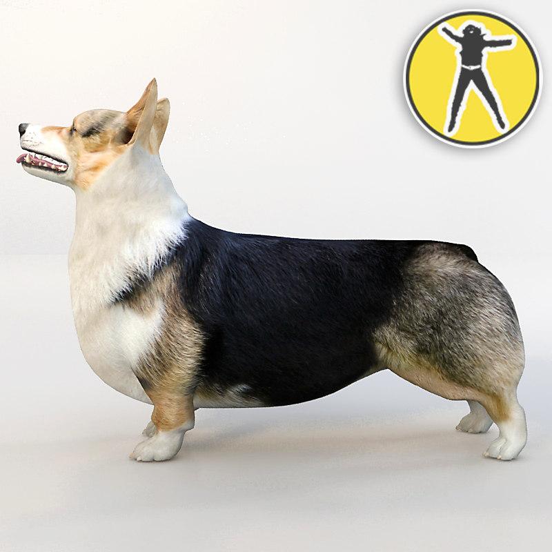 3d welsh-corgi pembroke dogs corgi