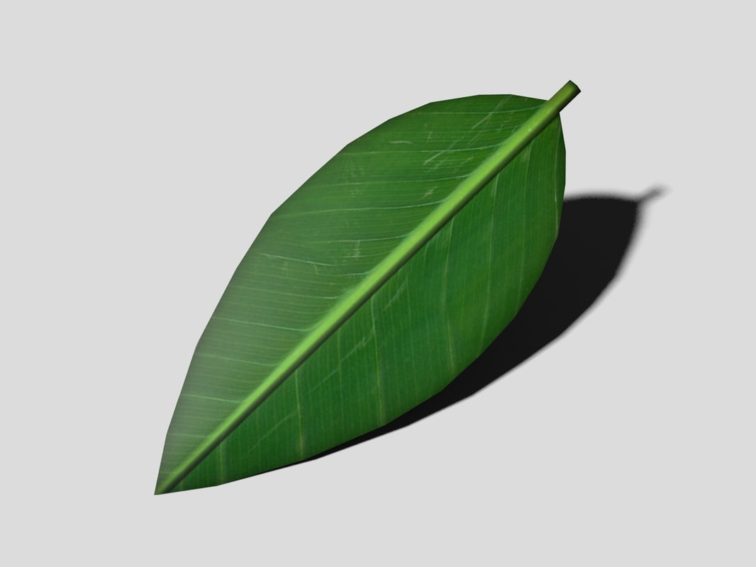 green leaf 3d model