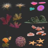 seascape coral max