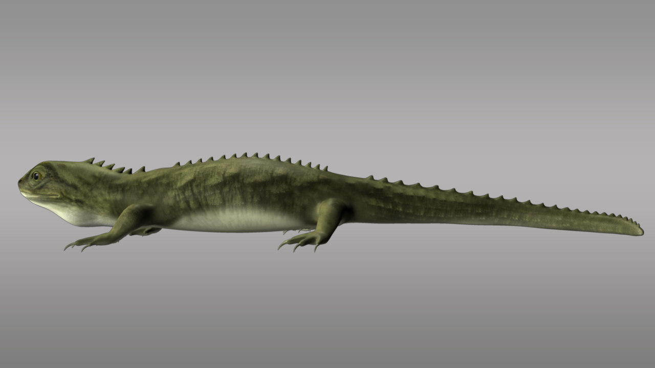 3d tuatara sphenodon punctatus lizards