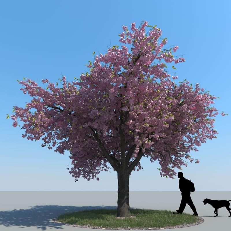 3d model realistic cherry tree