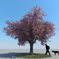 3d model realistic cherry tree