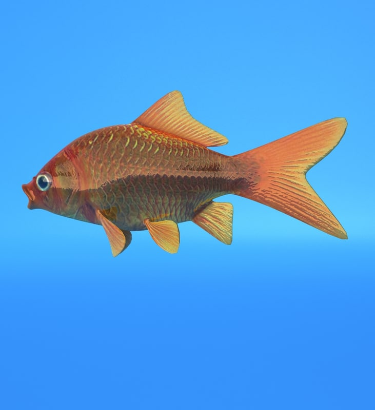 gold fish goldfish 3d model