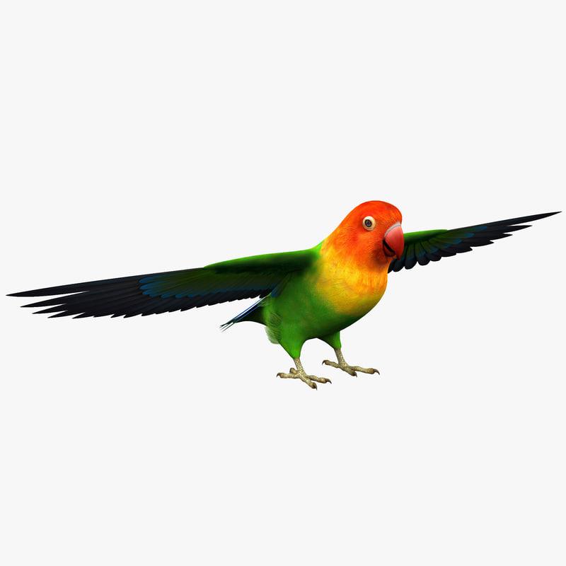 3d model lovebird bird