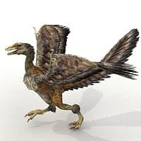max dinosaur archaeopteryx