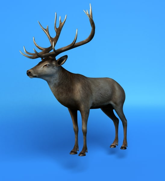 3ds max deer stag
