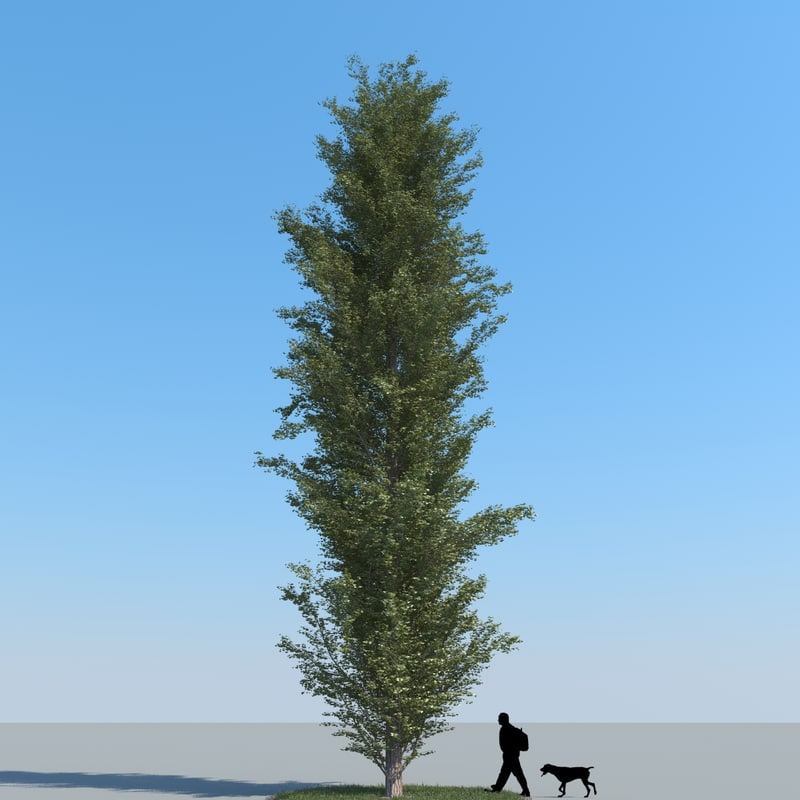 3d realistic poplar