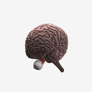 human brain cerebellum optic 3d obj
