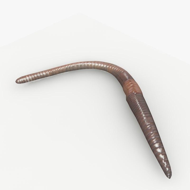 maya worm worm