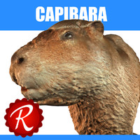 capybara max