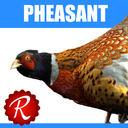 pheasant 3D models