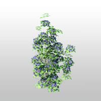 clematis plant tree 3d max