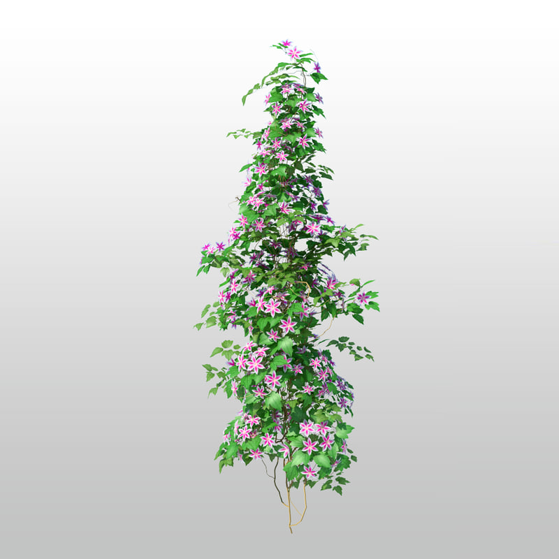 max tree flower