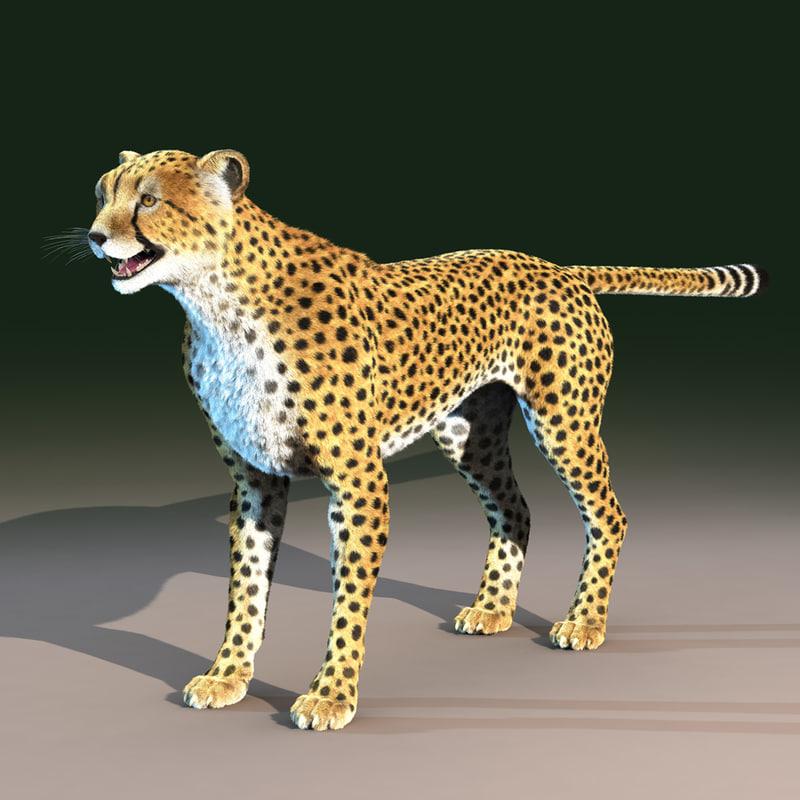 3d model cheetah cat