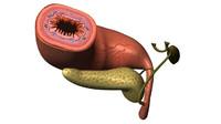 ma stomach digestive organ
