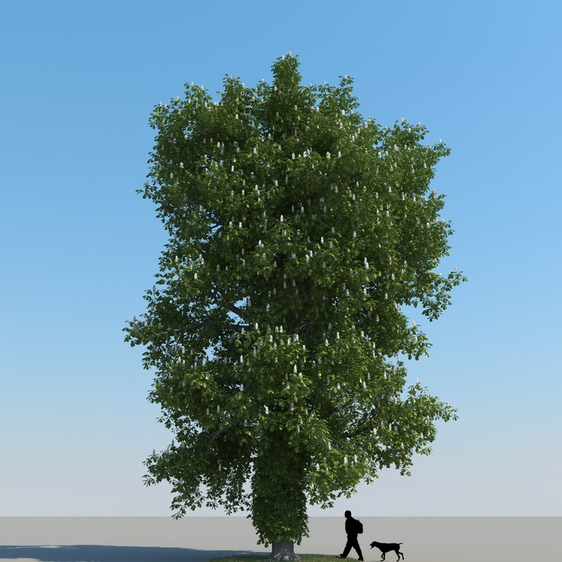 3d obj realistic chestnut tree leaf