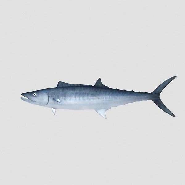 fish mackerel 3d model