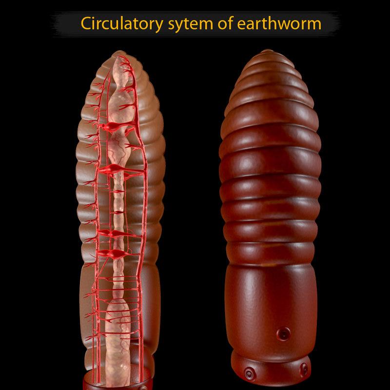 obj earthworm earth