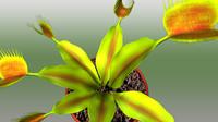 3d ma dionaea fly plant