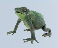 maya frog
