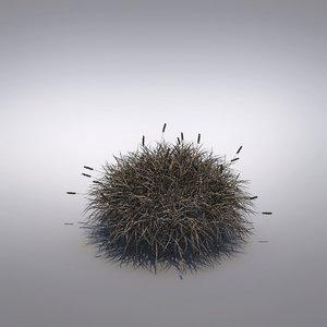 max ornamental grass festuca