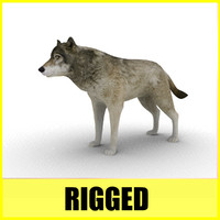 wolf rigged animation c4d