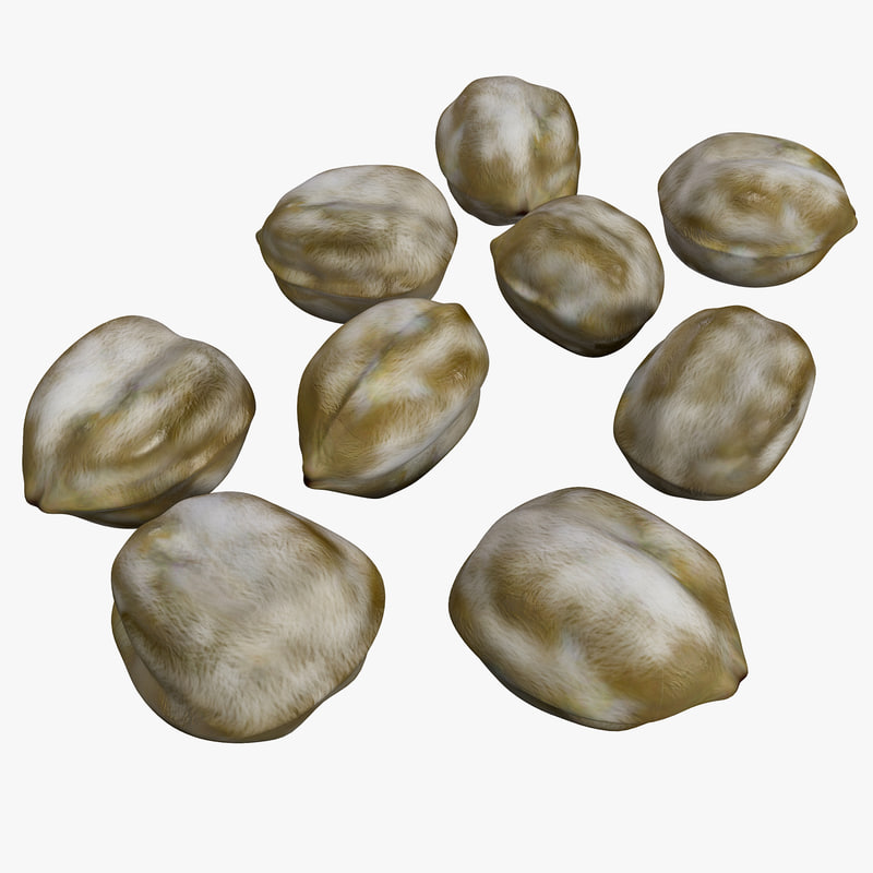 candlenut nut 3d model