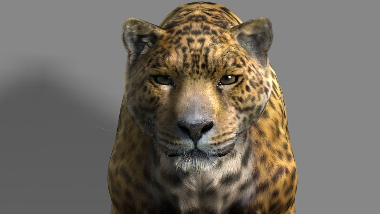 3d leopard cat model