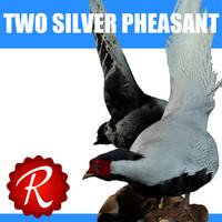3d model silver pheasants