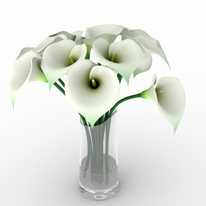 3d calla lily