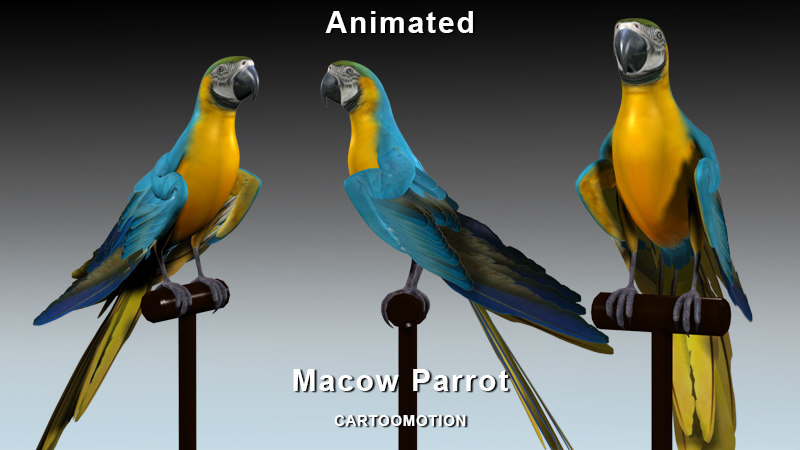 macaw parrot 3d max