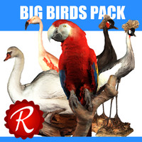 Big Birds Pack