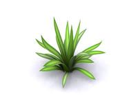 Agave (3D, Lofted)