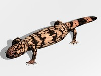 lizard gila monster 3d x