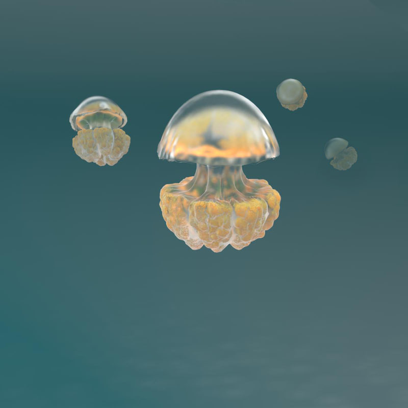 3d model jellyfish jelly fish