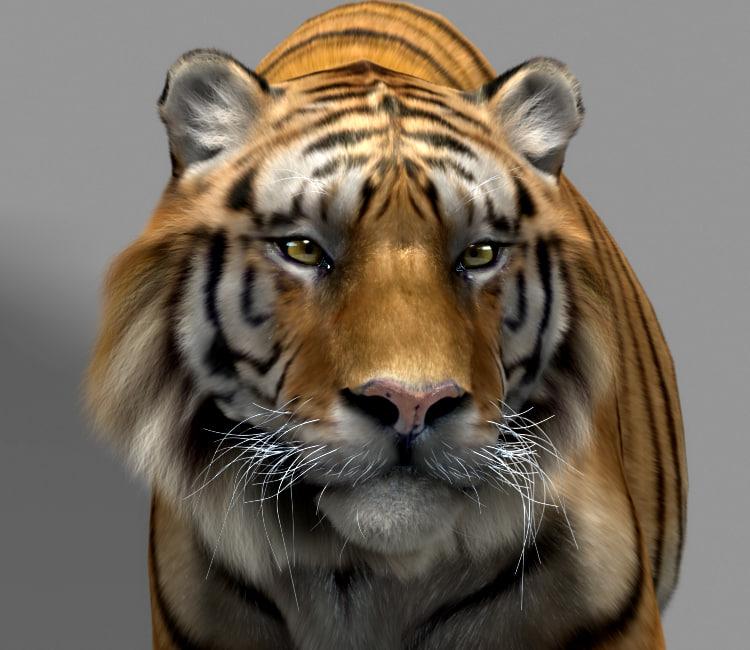 3d model tiger animation fur