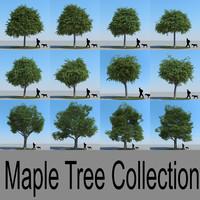 3d model maple trees
