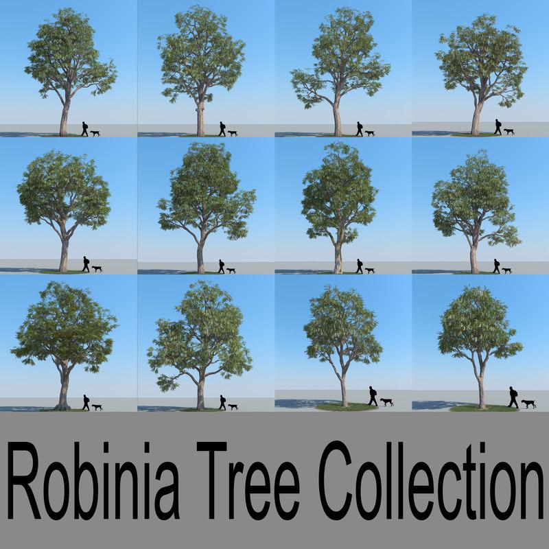 realistic robinia trees max