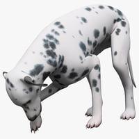 Dalmatian Dog Pose 5