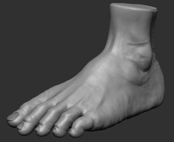 3d foot ztl zbrush model